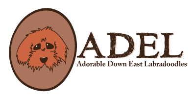 Adorable Down East Labradoodles Retina Logo