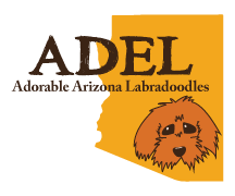 Adorable Down East Labradoodles Logo